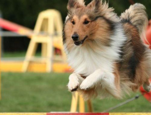 Participe con sus mascotas en la Expo-Bienestar Animal Heredia