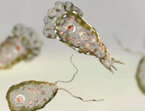 Fallece niño por bacteria come cerebros no relacionada con aguas termales
