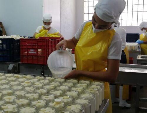 Pequeños productores de la provincia herediana logran exportar palmito envasado a Europa