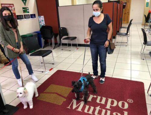 "Mascotas pueden entrar a Grupo Mutual gracias a programa ""Pets Friendly"""